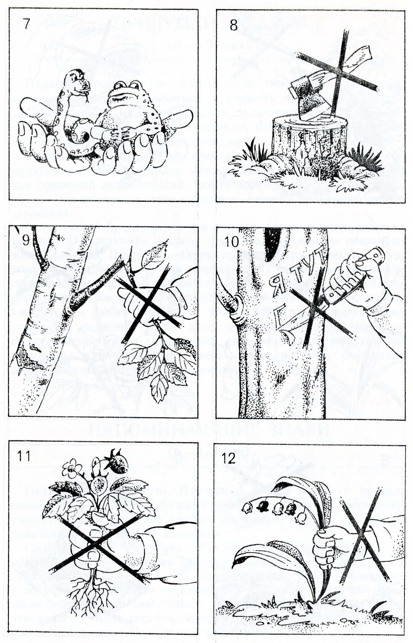 Раскраски по правилам поведения в лесу