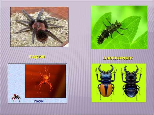 насекомые пауки