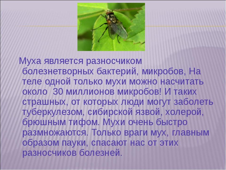 Муха является разносчиком болезнетворных бактерий, микробов, На теле одной т...