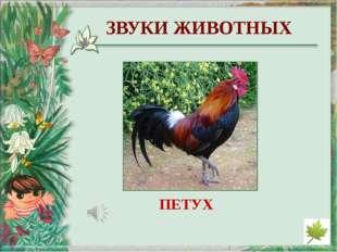 http://derhaos.ru/wp-content/uploads/2010/12/bereza346jpg_thumb.jpg - изображ