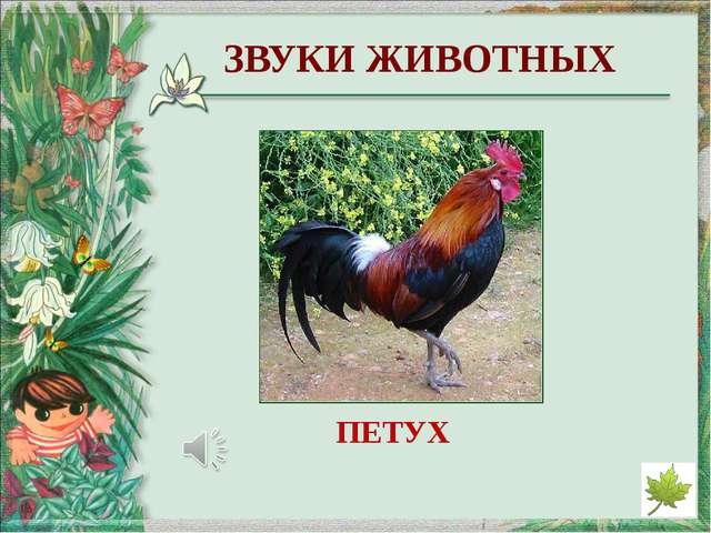 http://derhaos.ru/wp-content/uploads/2010/12/bereza346jpg_thumb.jpg - изображ...