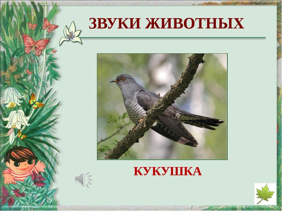 http://www.marinar.ru/uploads/posts/2013-04/thumbs/1365163123_zvedchataja_kam...