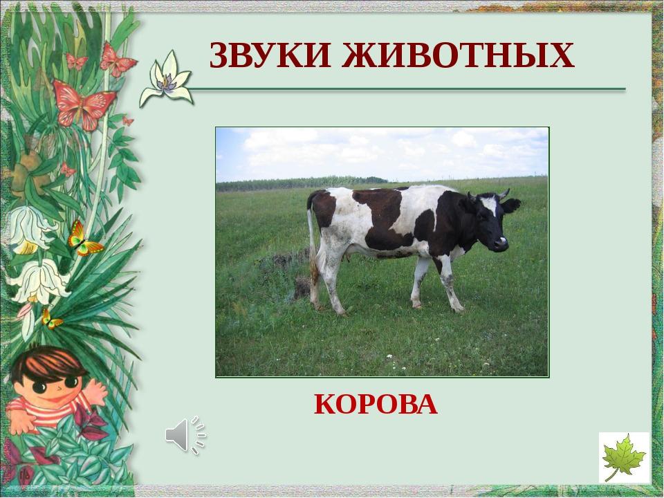http://easyen.ru/load/metodika/k_prezentacijam/shablony_prezentacij_ja_poznaj...