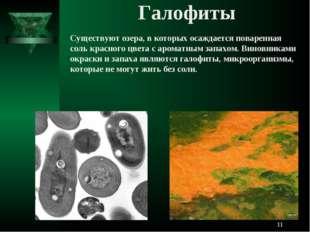 Галофиты Существуют озера, в которых осаждается поваренная соль красного цвет
