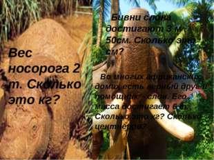 Во многих африканских домах есть верный друг и помощник – слон. Его масса дос