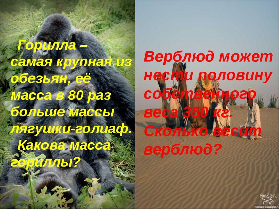Горилла – самая крупная из обезьян, её масса в 80 раз больше массы лягушки-го...