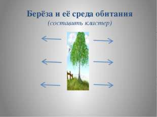 Берёза и её среда обитания (составить кластер)