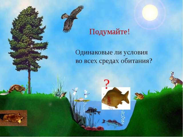 Одинаковые ли условия во всех средах обитания?   Подумайте! ?