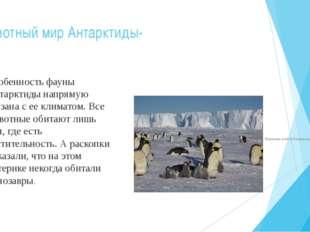 Животный мир Антарктиды- Особенность фауны Антарктиды напрямую связана с ее к