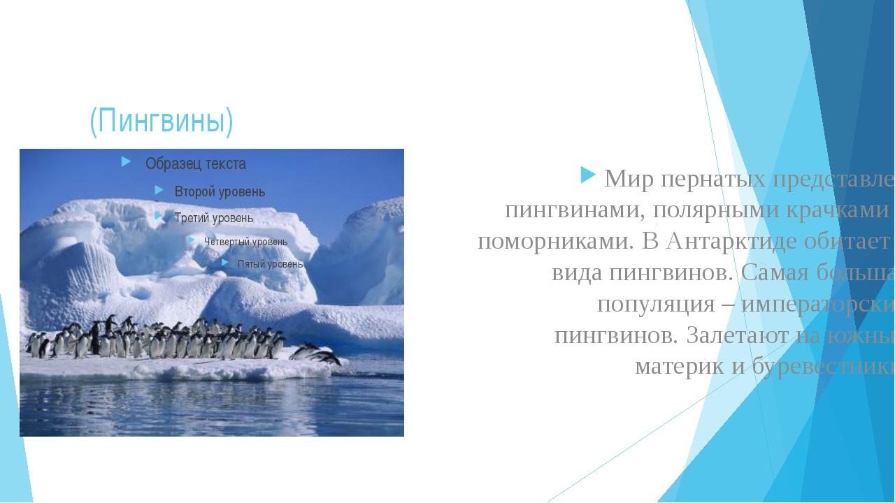(Пингвины) Мир пернатых представлен пингвинами, полярными крачками и поморник...