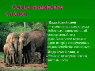 Семья индийских слонов. Индийскийслон —млекопитающее отряда хоботных, ед