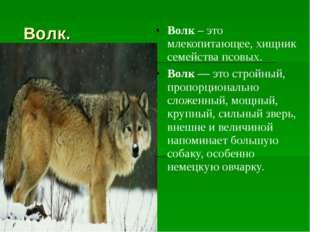Волк. Волк– это млекопитающее, хищник семейства псовых. Волк— это стройный