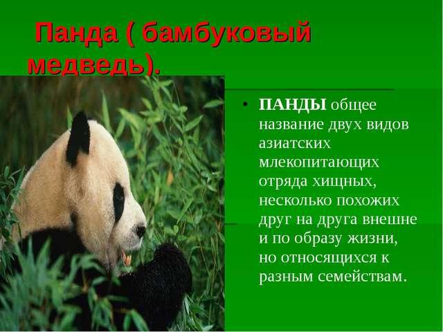 Панда ( бамбуковый медведь). ПАНДЫобщее название двух видов азиатских млеко...