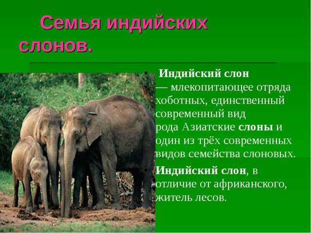 Семья индийских слонов. Индийскийслон —млекопитающее отряда хоботных, ед...