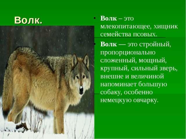 Волк. Волк– это млекопитающее, хищник семейства псовых. Волк— это стройный...