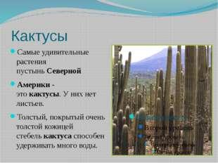 Кактусы Самые удивительные растения пустыньСеверной Америки-этокактусы.У