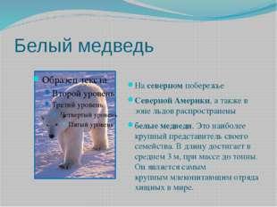 Белый медведь Насеверномпобережье СевернойАмерики, а также в зоне льдовр