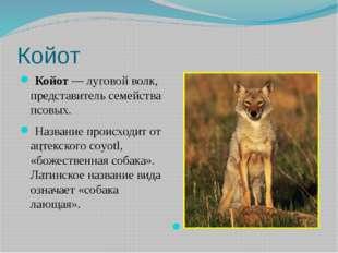 Койот Койот— луговой волк, представитель семейства псовых. Название происх