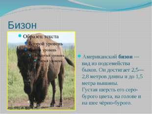 Бизон Американскийбизон — вид из подсемейства быков.Он достигает 2,5—2,8 ме