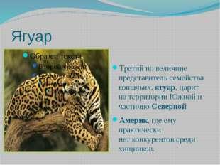 Ягуар Третий по величине представитель семейства кошачьих,ягуар, царит нате