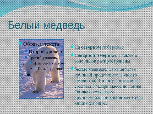 Белый медведь Насеверномпобережье СевернойАмерики, а также в зоне льдовр...