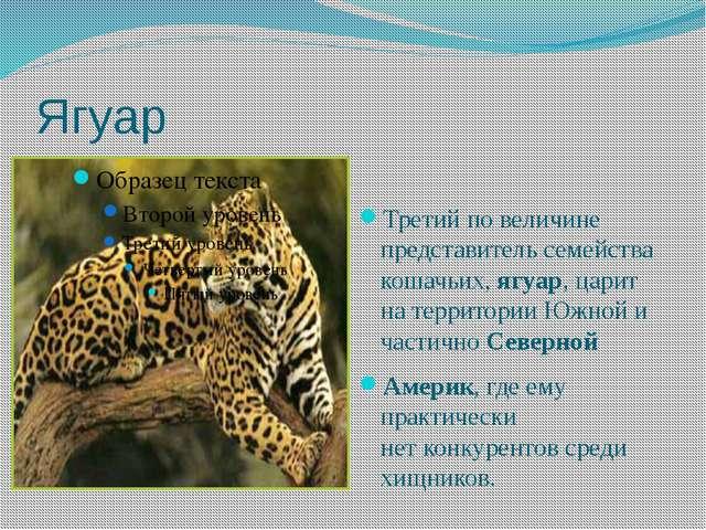 Ягуар Третий по величине представитель семейства кошачьих,ягуар, царит нате...