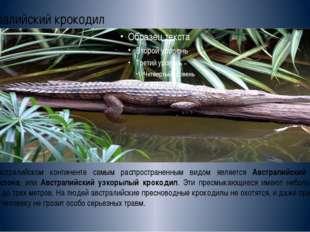 Австралийский крокодил На австралийском континенте самым распространенным вид