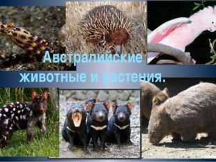 Австралийские животные и растения.