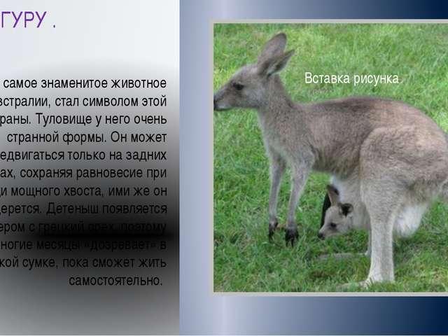 КЕНГУРУ . Кенгуру самое знаменитое животное Австралии, стал символом этой стр...