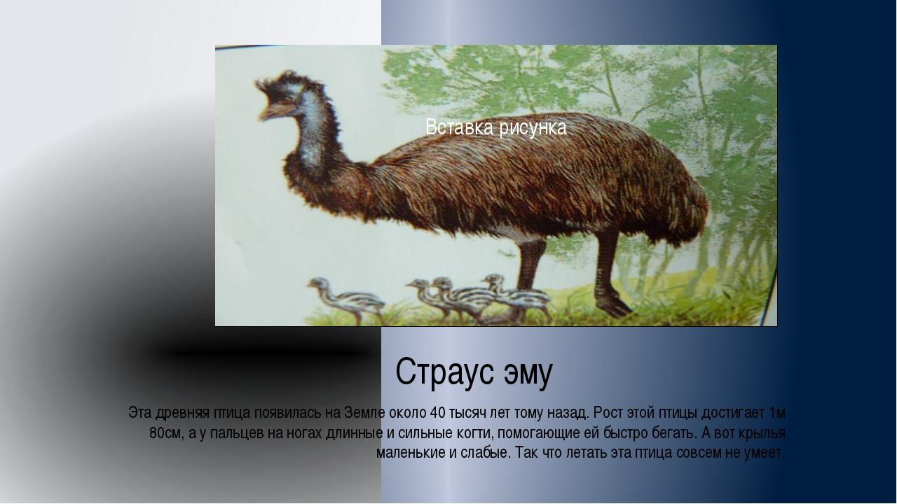 Страус эму Эта древняя птица появилась на Земле около 40 тысяч лет тому наза...