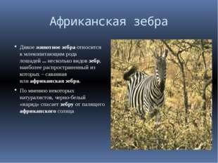 Африканская зебра Дикоеживотноезебраотносится к млекопитаю