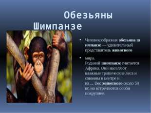 Обезьяны     Шимпанзе  Человекообразнаяобезьянашимпанзе— у