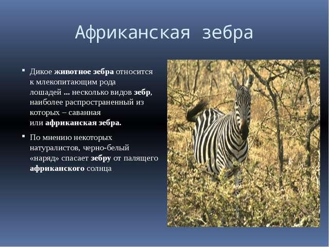 Африканская зебра Дикоеживотноезебраотносится к млекопитаю...
