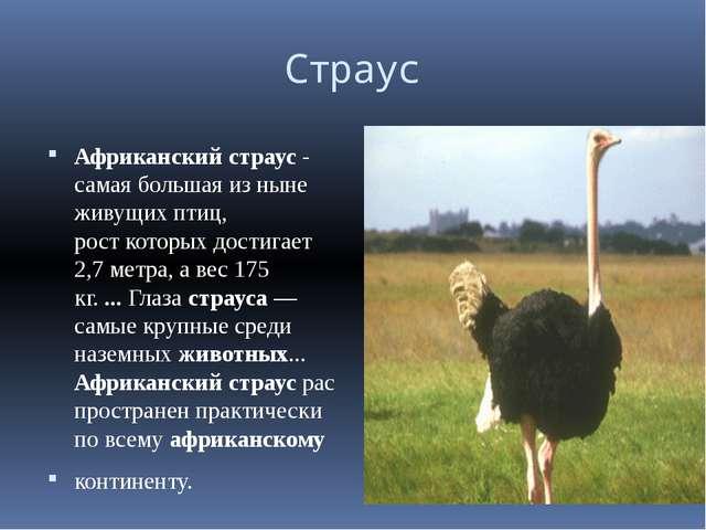 Страус Африканскийстраус- самая большая из ныне живущих птиц, ро...