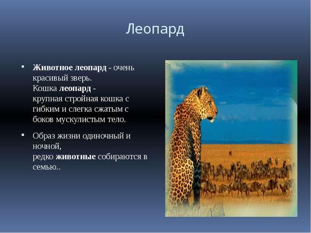 Леопард Животноелеопард- очень красивый зверь. Кошкалеопар...