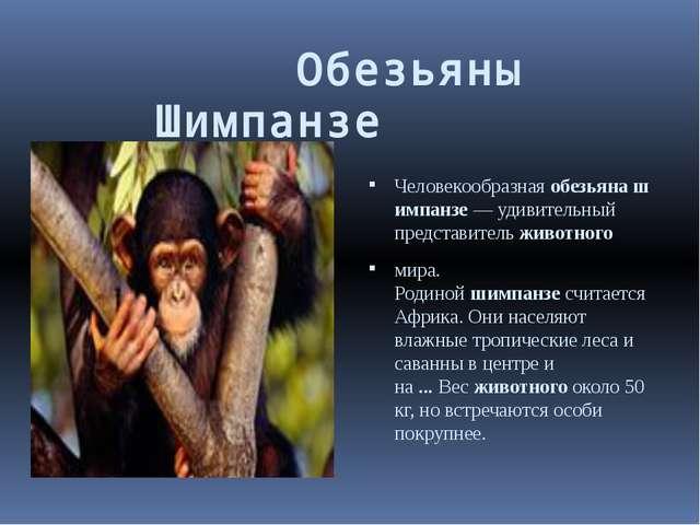 Обезьяны     Шимпанзе  Человекообразнаяобезьянашимпанзе— у...