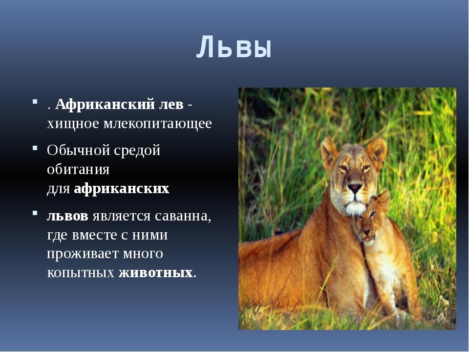 Львы .Африканскийлев- хищноемлекопитающее Обычной с...