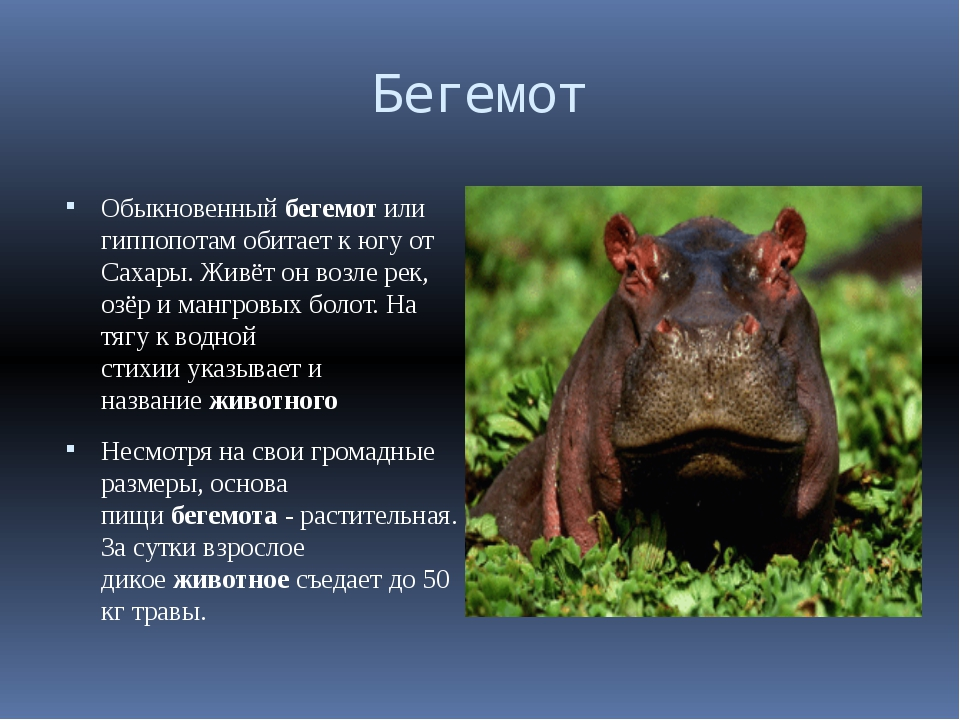 Дикие животные дикие животные мир животных животный мир