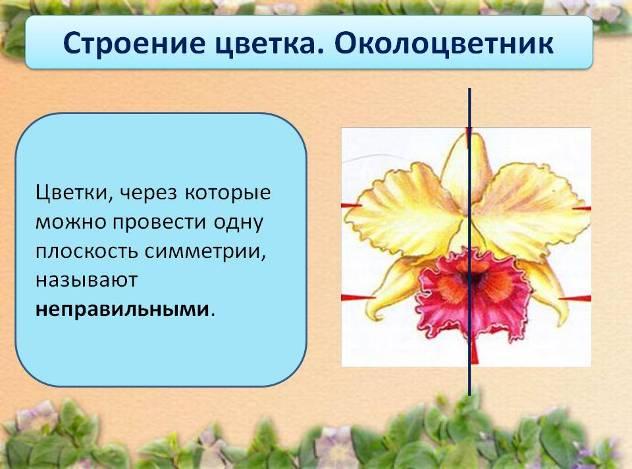 Конспект урока цветок 6 класс