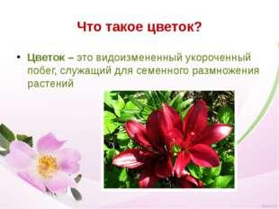 Что такое цветок? Цветок – это видоизмененный укороченный побег, служащий для
