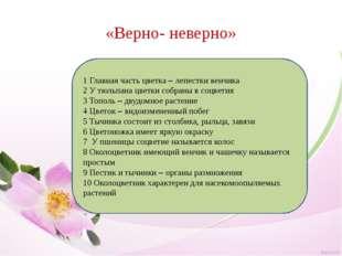 «Верно- неверно» 1 Главная часть цветка – лепестки венчика 2 У тюльпана цветк