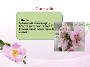 Синквейн 1 Цветок 2 обоеполый, одиночный 3 Радует, распускается, имеет 4 Цвет