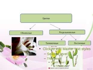 Цветки Обоеполые Раздельнополые Тычиночные Пестичные