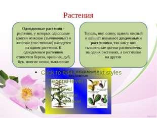 Растения Однодомные растения- растения, у которых однополые цветки мужские (