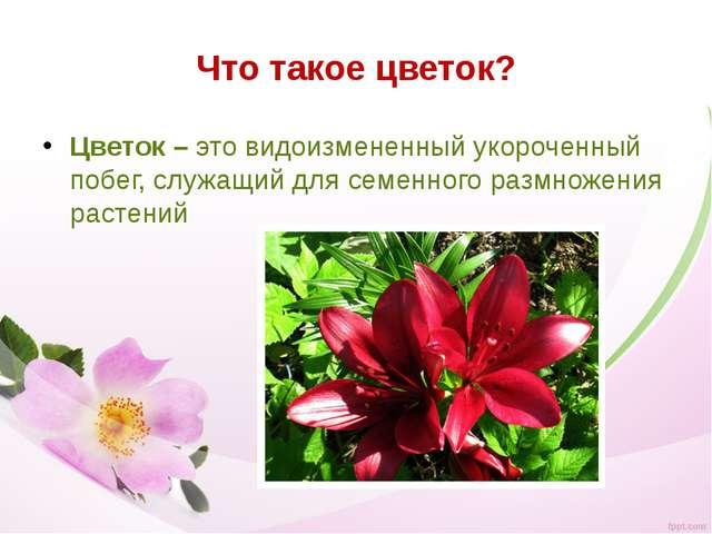 Что такое цветок? Цветок – это видоизмененный укороченный побег, служащий для...