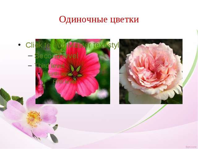 Одиночные цветки