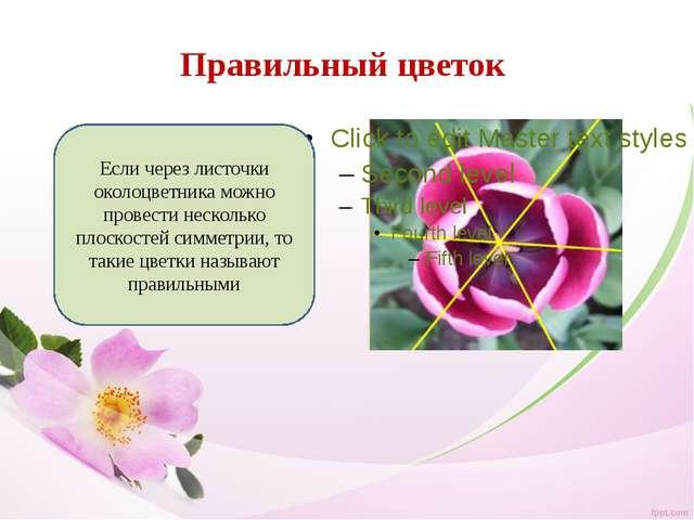 Правильный цветок Если через листочки околоцветника можно провести несколько...