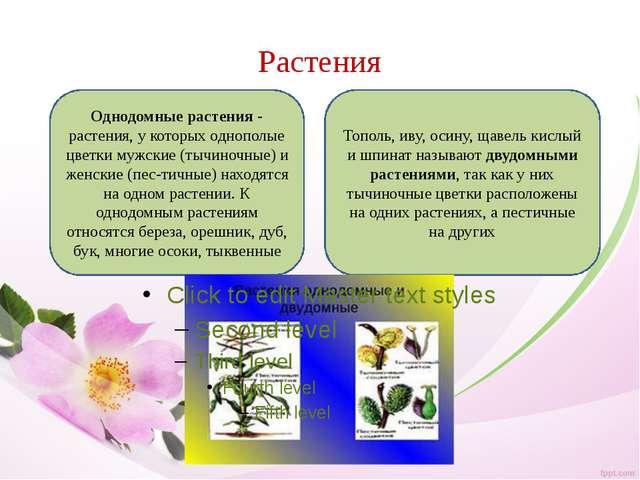 Растения Однодомные растения- растения, у которых однополые цветки мужские (...