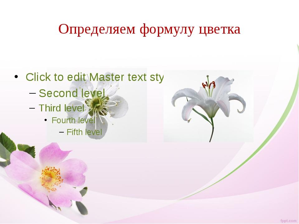 Определяем формулу цветка