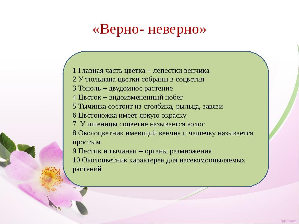 «Верно- неверно» 1 Главная часть цветка – лепестки венчика 2 У тюльпана цветк...